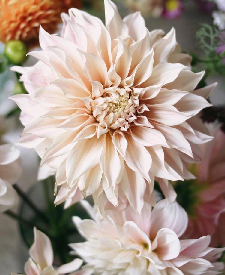 @floweriize